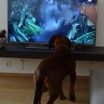 DSC00176 Caruso Fernseher